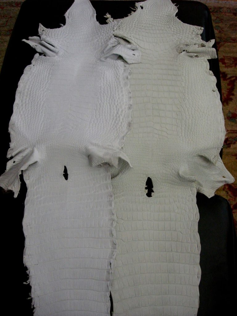 Undyed American Alligator a New Addition to our Veneto Collection Alligators