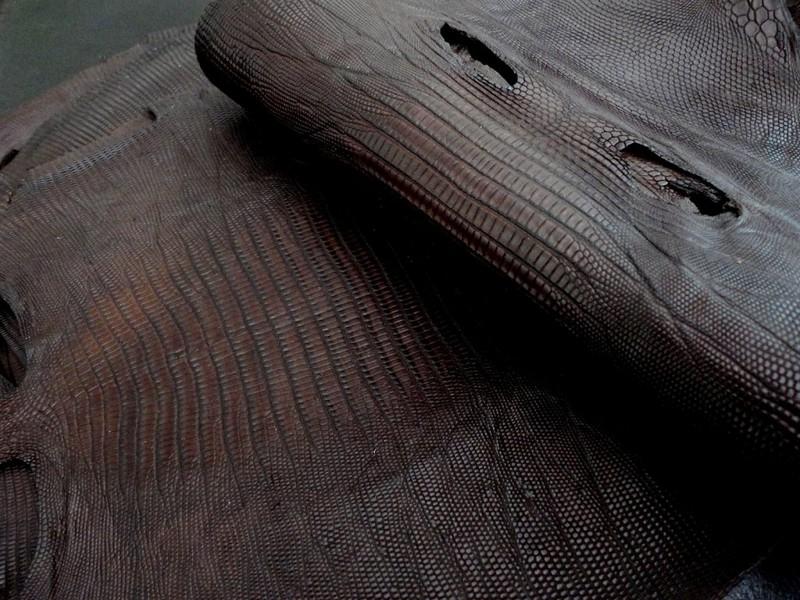 Tobacco Brown Teju Lizard
