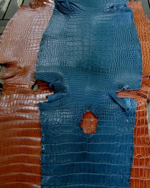 Azure Bleu Alligator