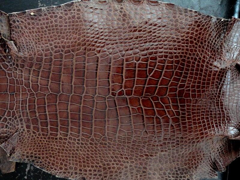 France Croco Alligator skins in current stock - Vin du Vieux-Port Alligator