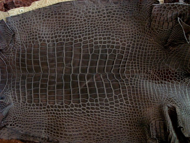 France Croco Alligator skins in current stock - Tourbe Brune Alligator