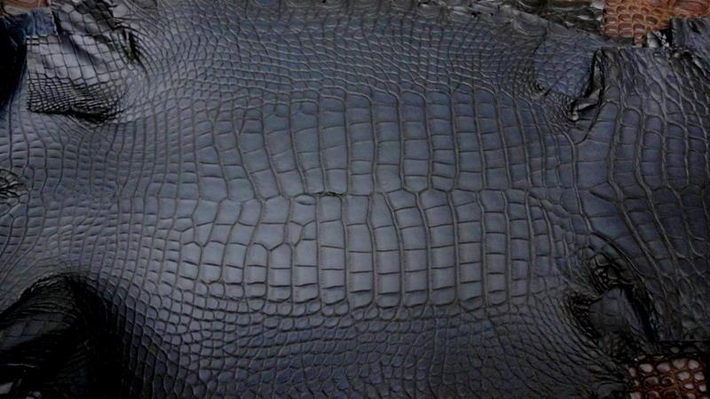France Croco Alligator skins in stock - Deep Blue Alligator