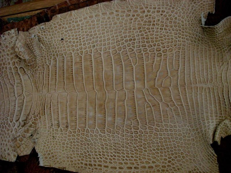 France Croco Alligator skins in stock - Bamboo Alligator