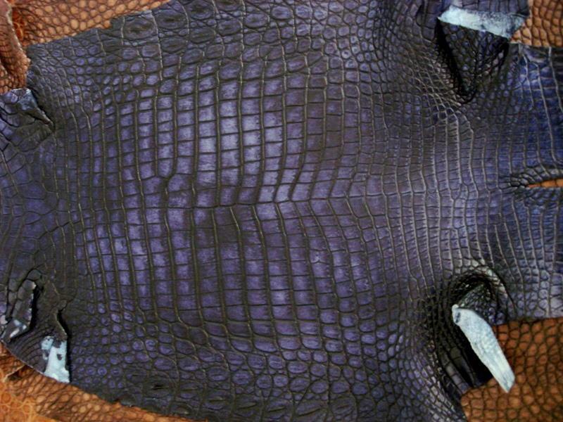 France Croco Alligator skins in stock - Acid Blue Alligator