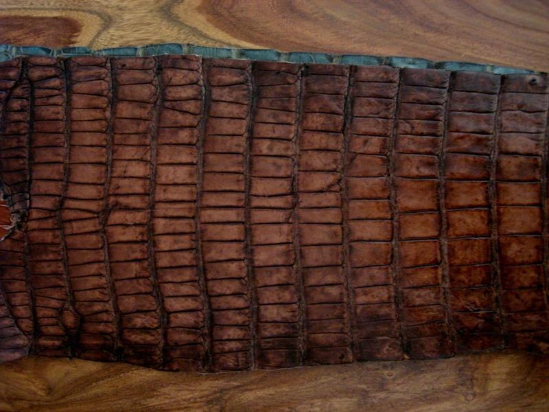 France Croco Alligator skins in stock - Antique Chestnut Alligator
