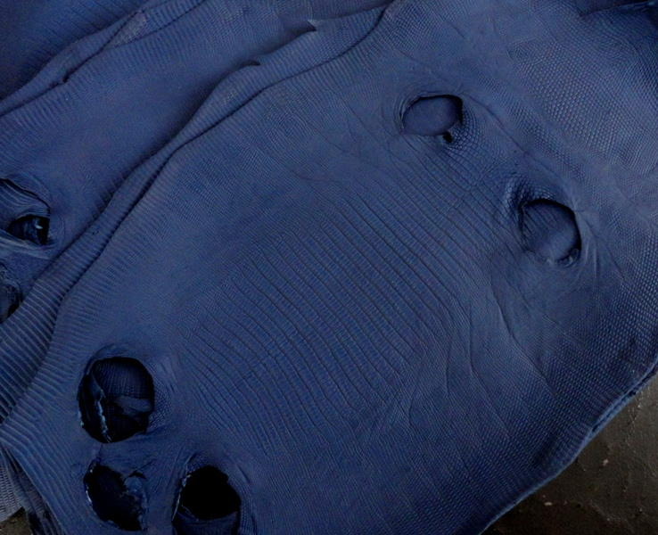 Baltic Blue SuperMatte Teju Lizard