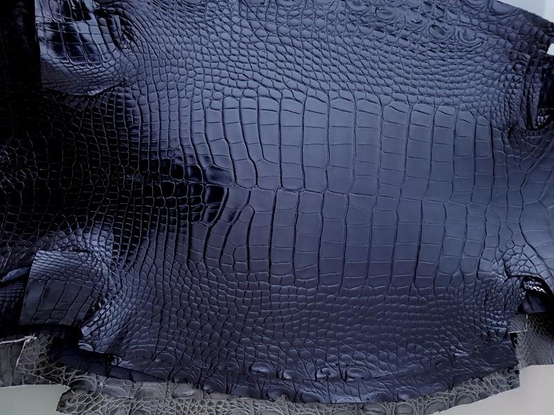 Million Dollar Black Alligator