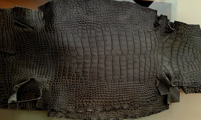 Grigio-Verde (Grey-Green) - Newly Arrived Alligator Hides from France Croco!